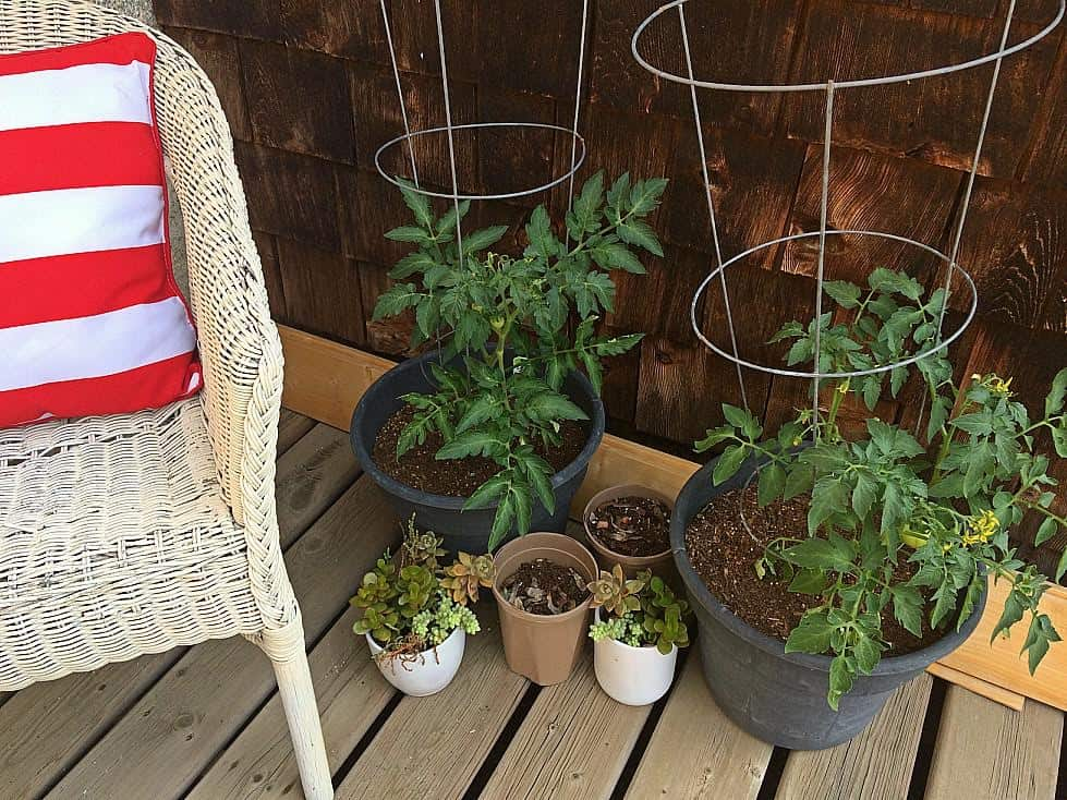 Simple Container Garden