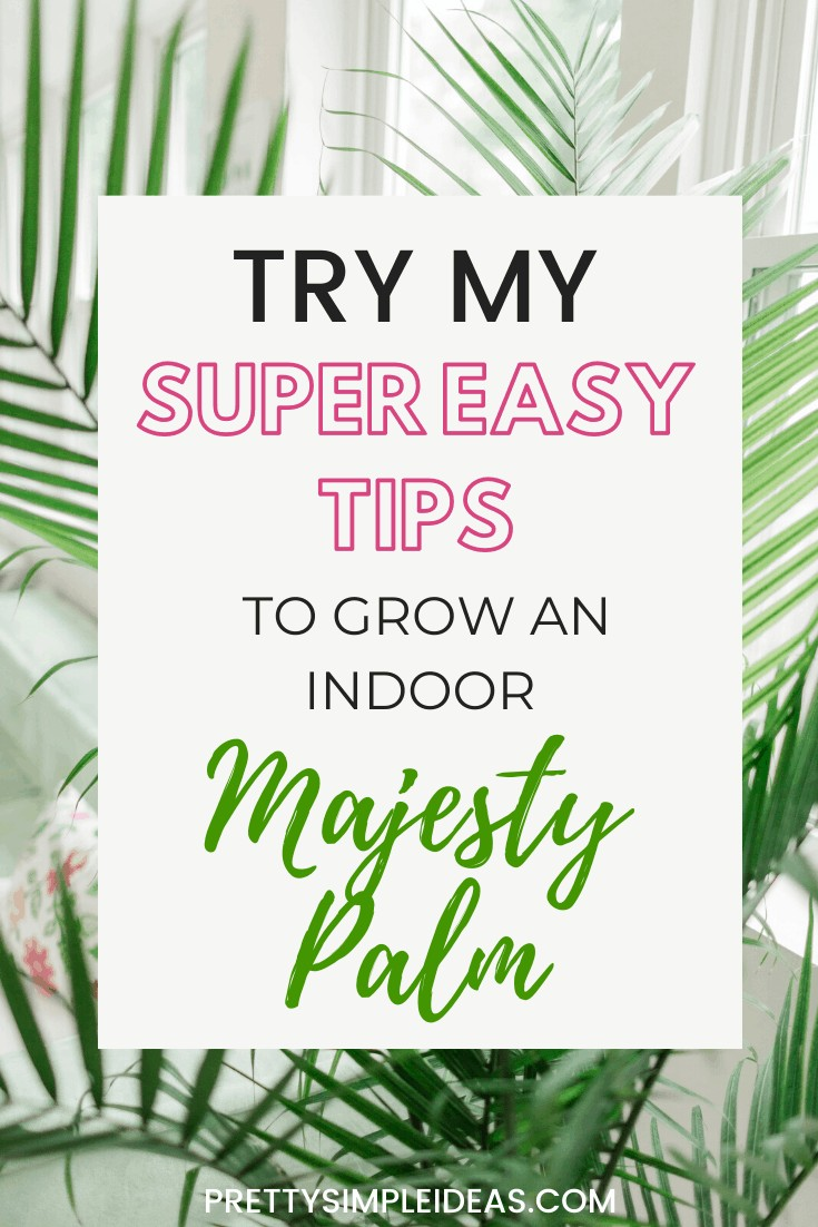 HOW TO CARE FOR YOUR INDOOR MAJESTY PALM